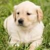 日本盲導犬協会に寄付をしよう!